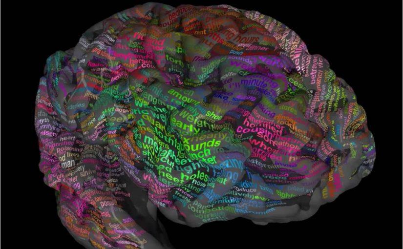 The Verbal Brain
