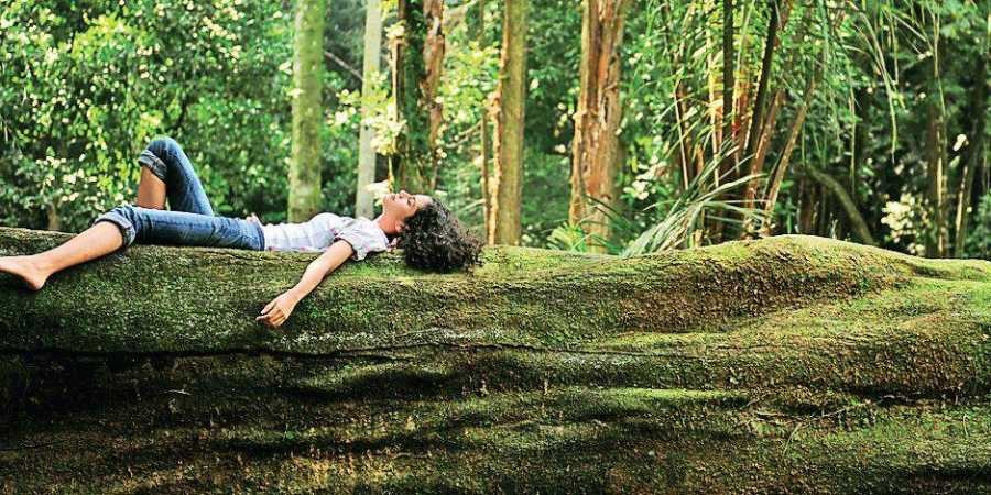 Shinrin-Yoku (forest bathing)